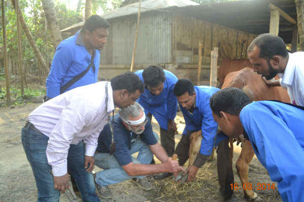 Dan and trainees inspecting hooves