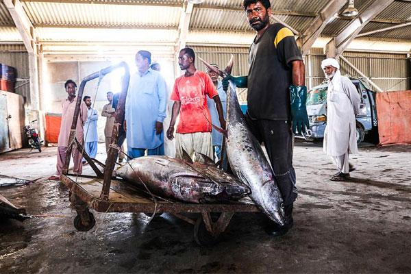 Pakistani fishers
