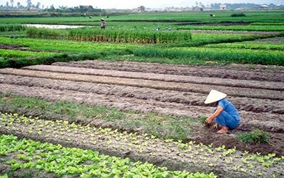 New U.S. Project Links Asian Farmers with Affordable Technology