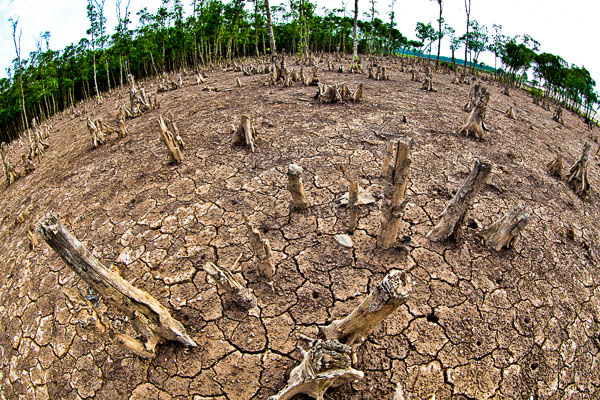 parched earth deforestation