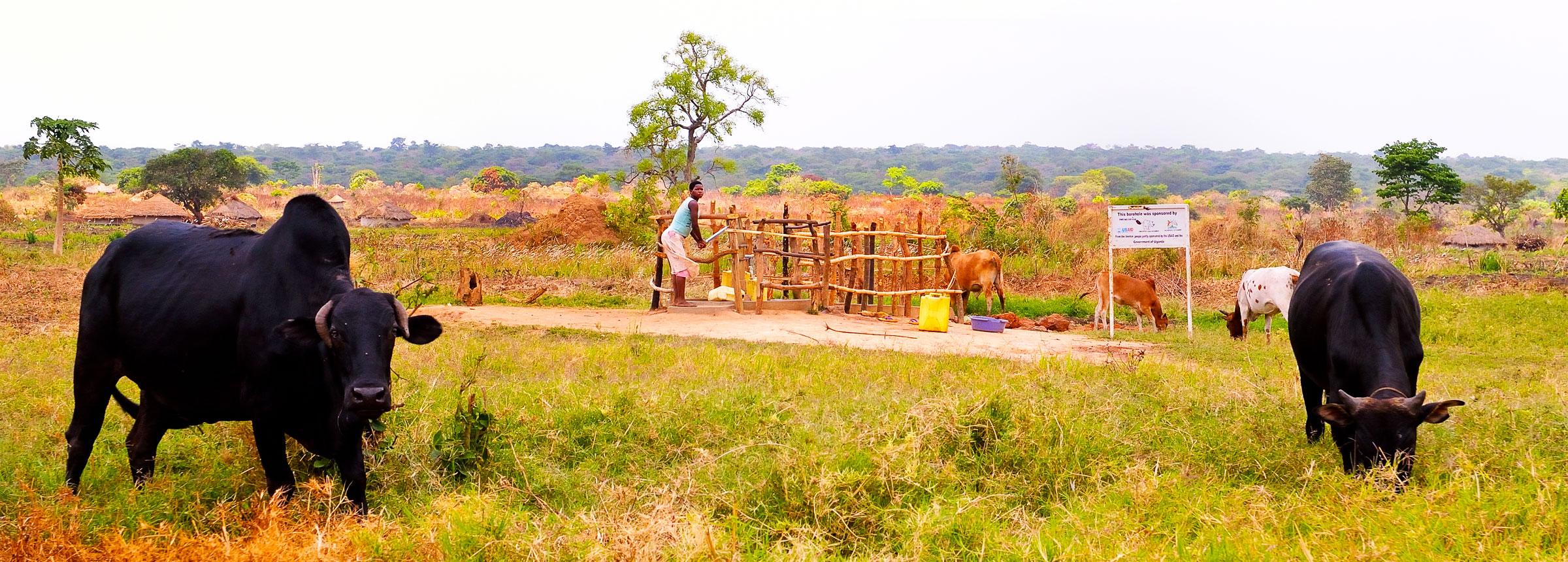 Ugandan woman drawing water at well