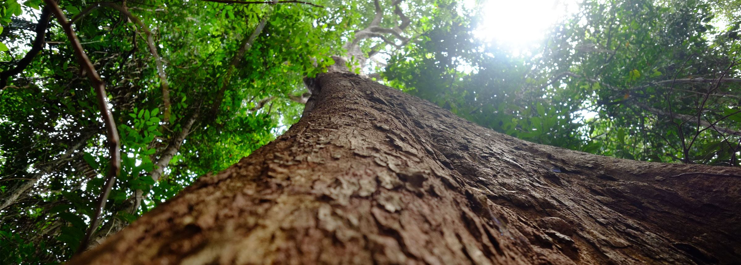 Forest tree view from bottom