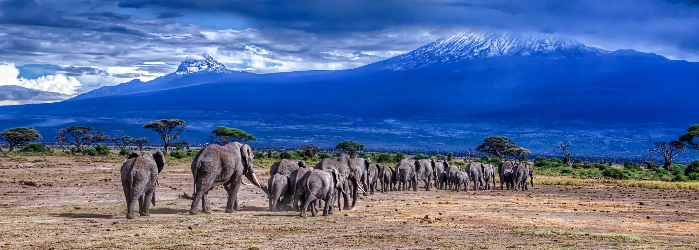 Elephants Head back to the Foothills of Mt. Kilimanjaro