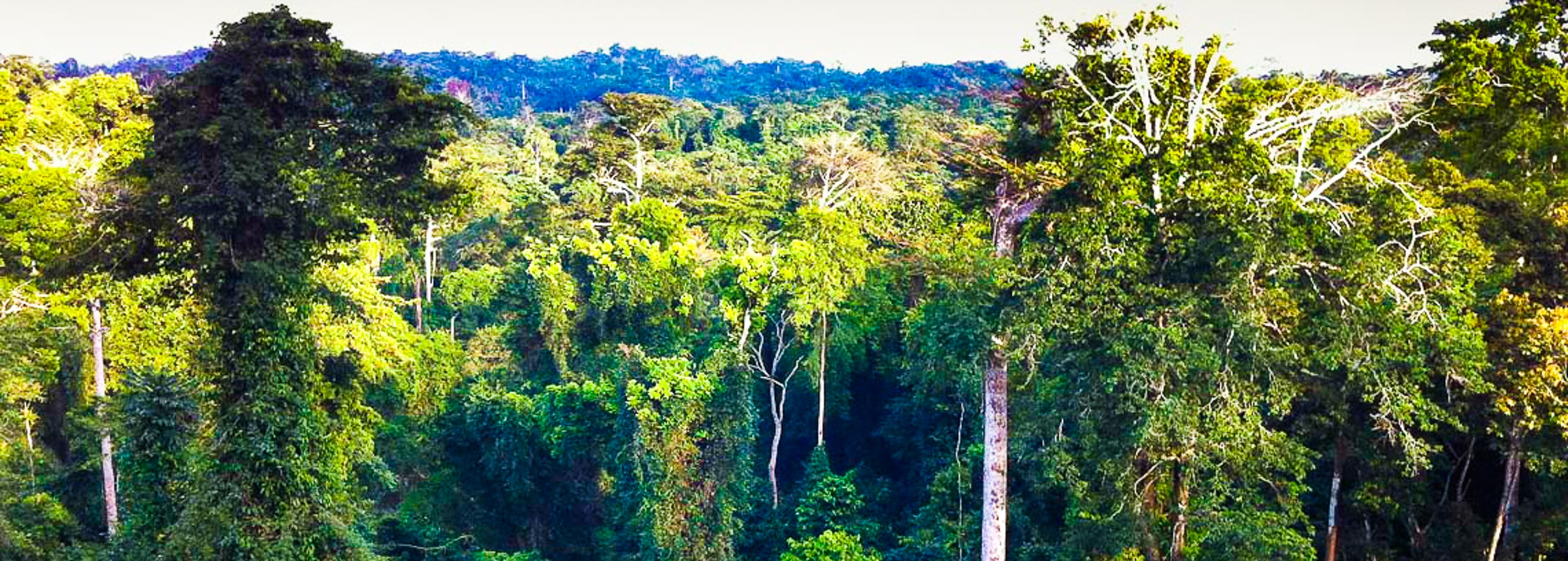 Forest in Ghana