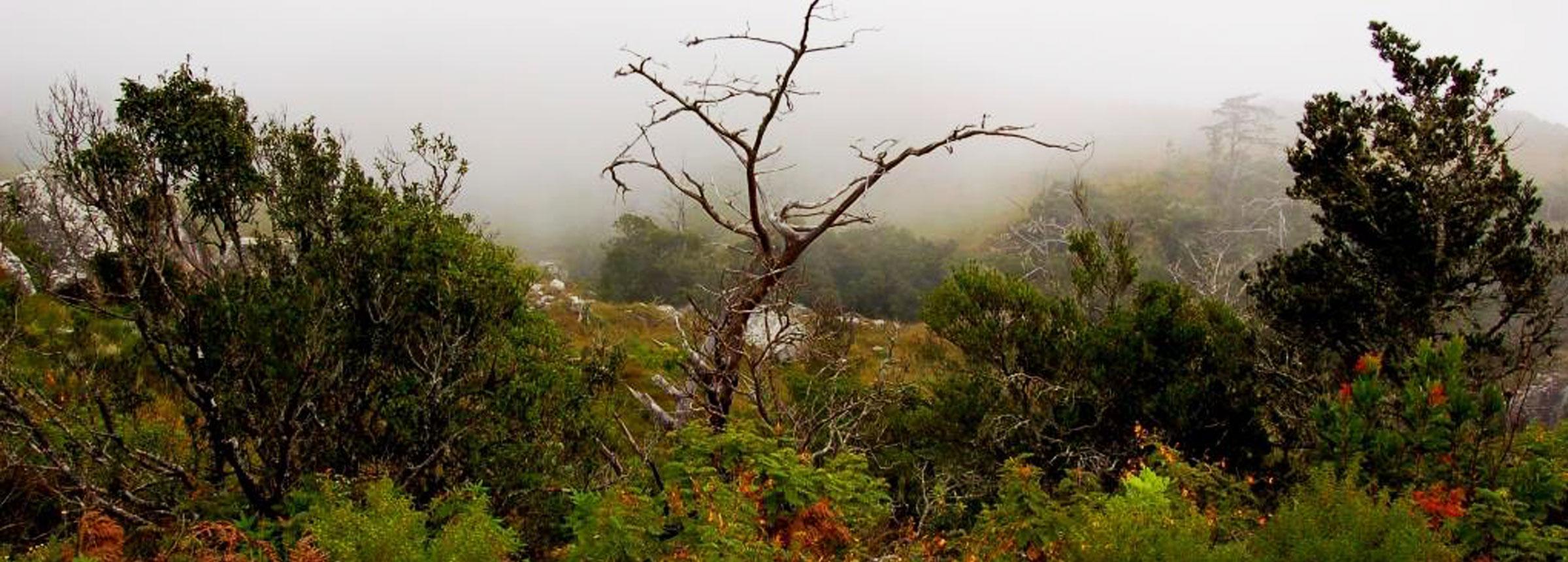 Malawi forest