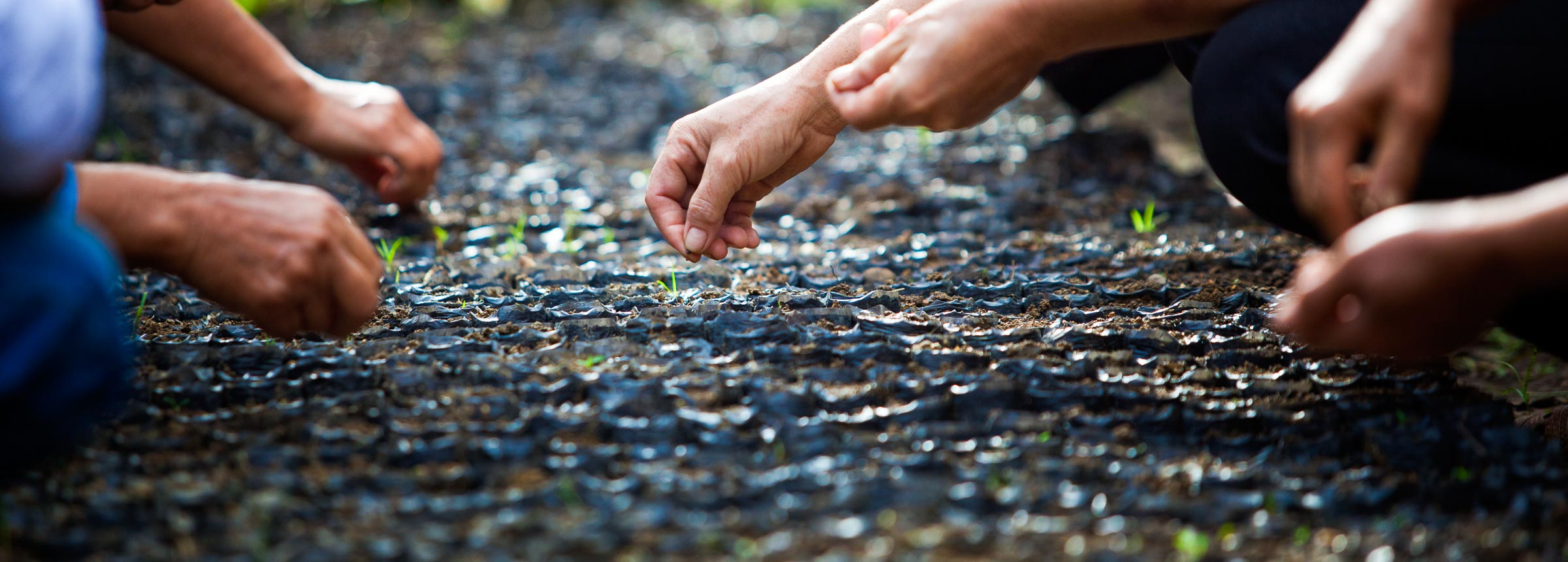 People planting seeds