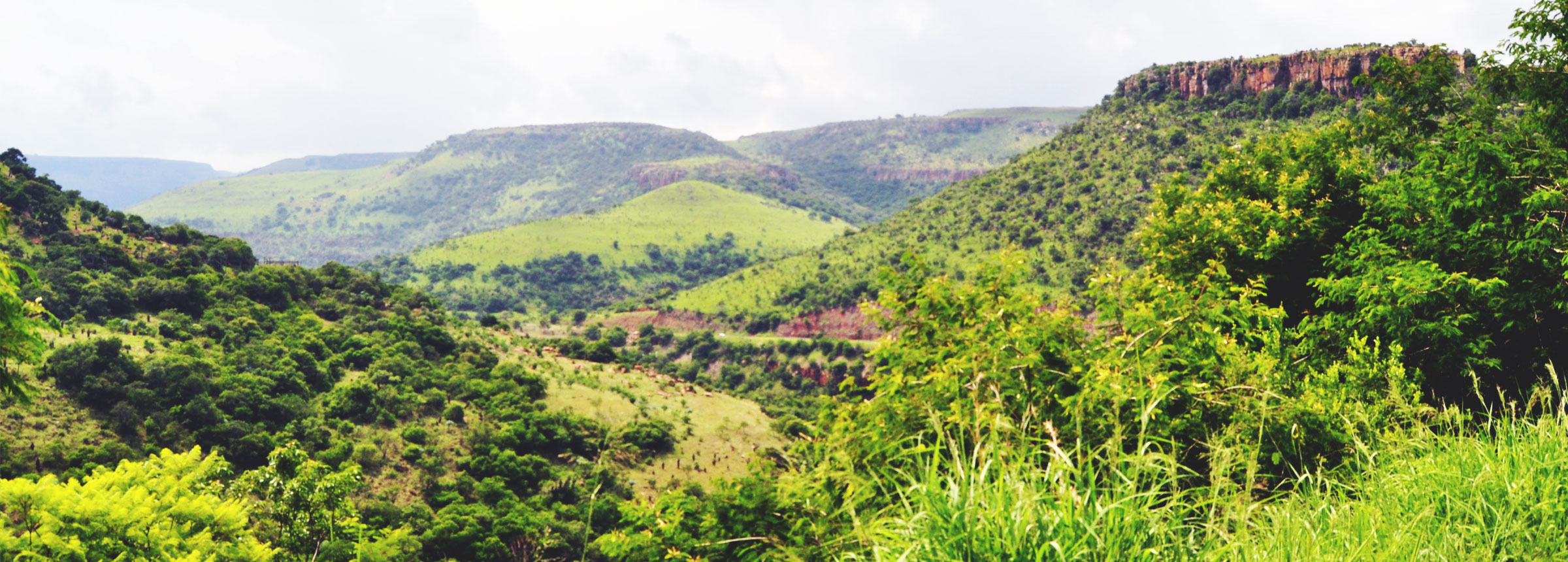 Mozambican forest