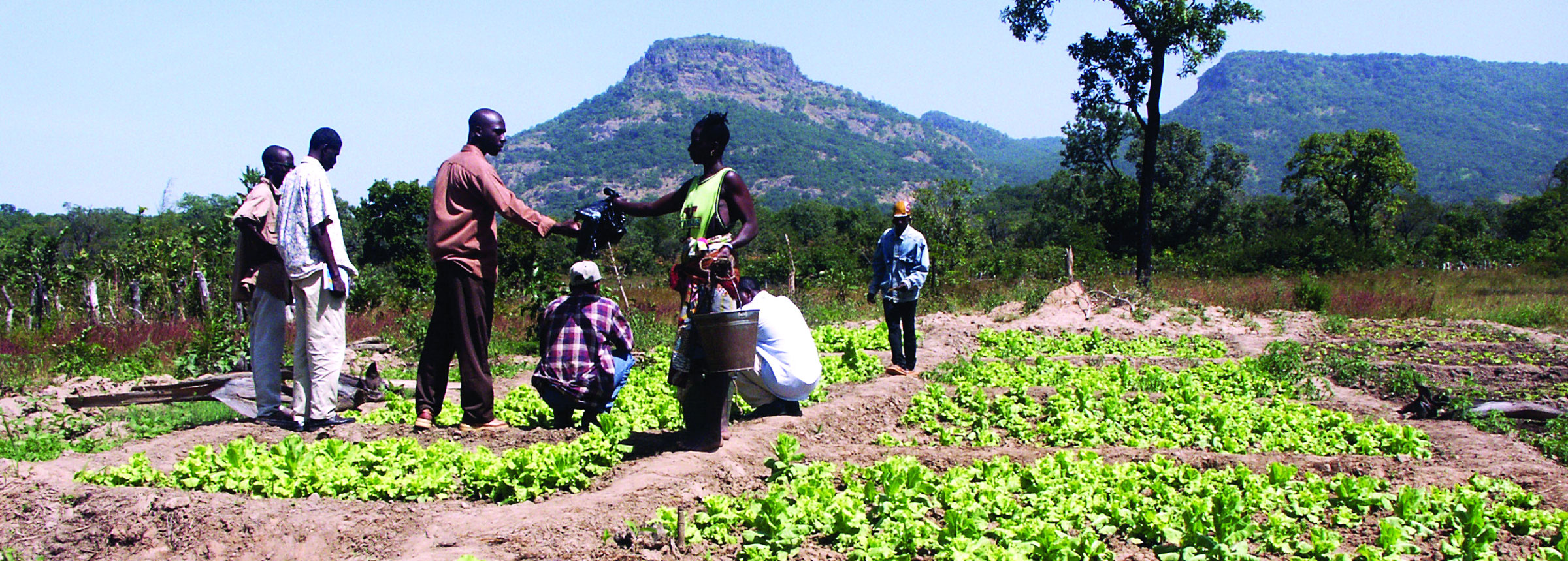 Guinea farmers