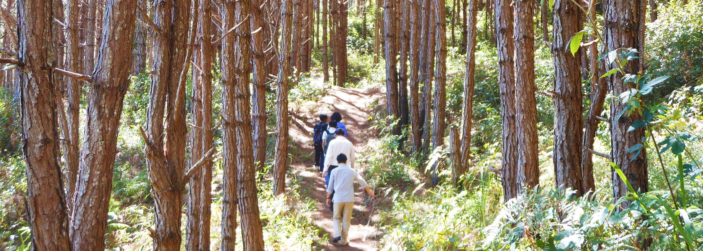 People walking in forest