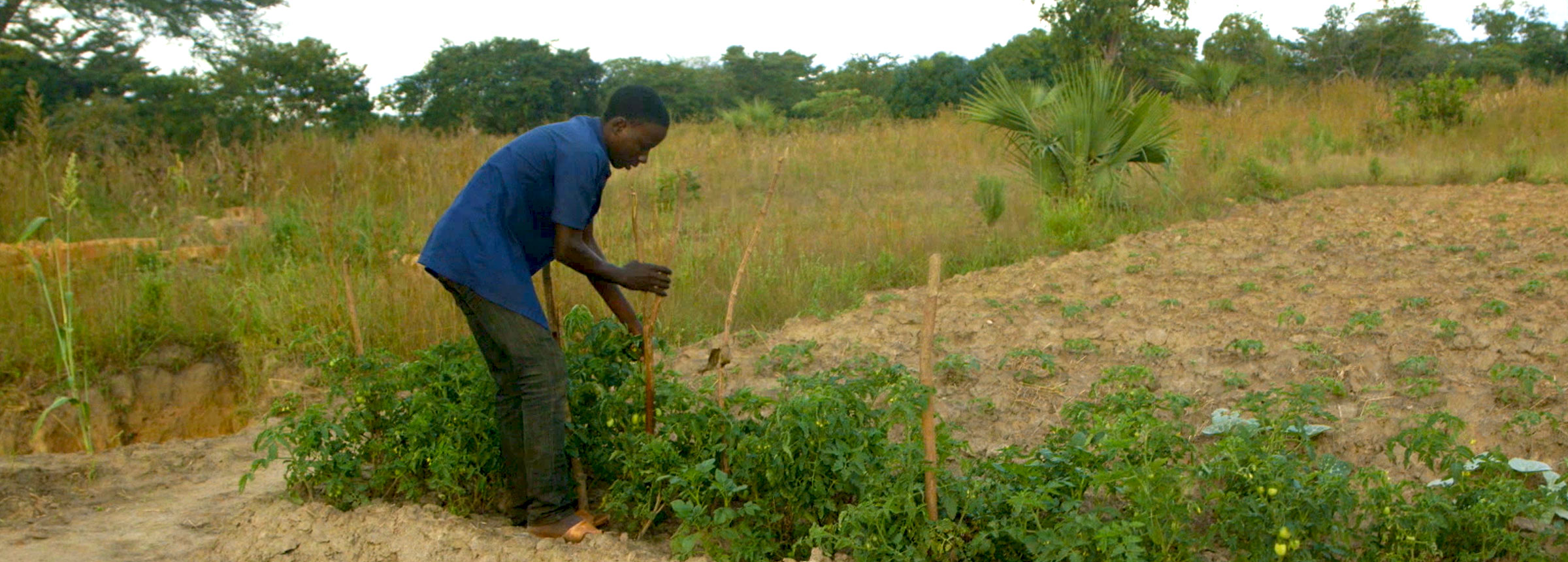 Youth works on agricultural plot