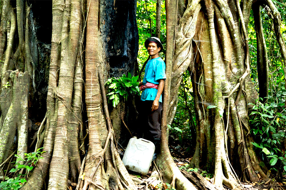 man collects resin from tree in Cambodian forest
