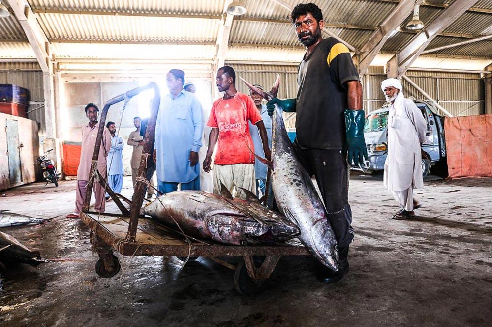 Pakstani fishers