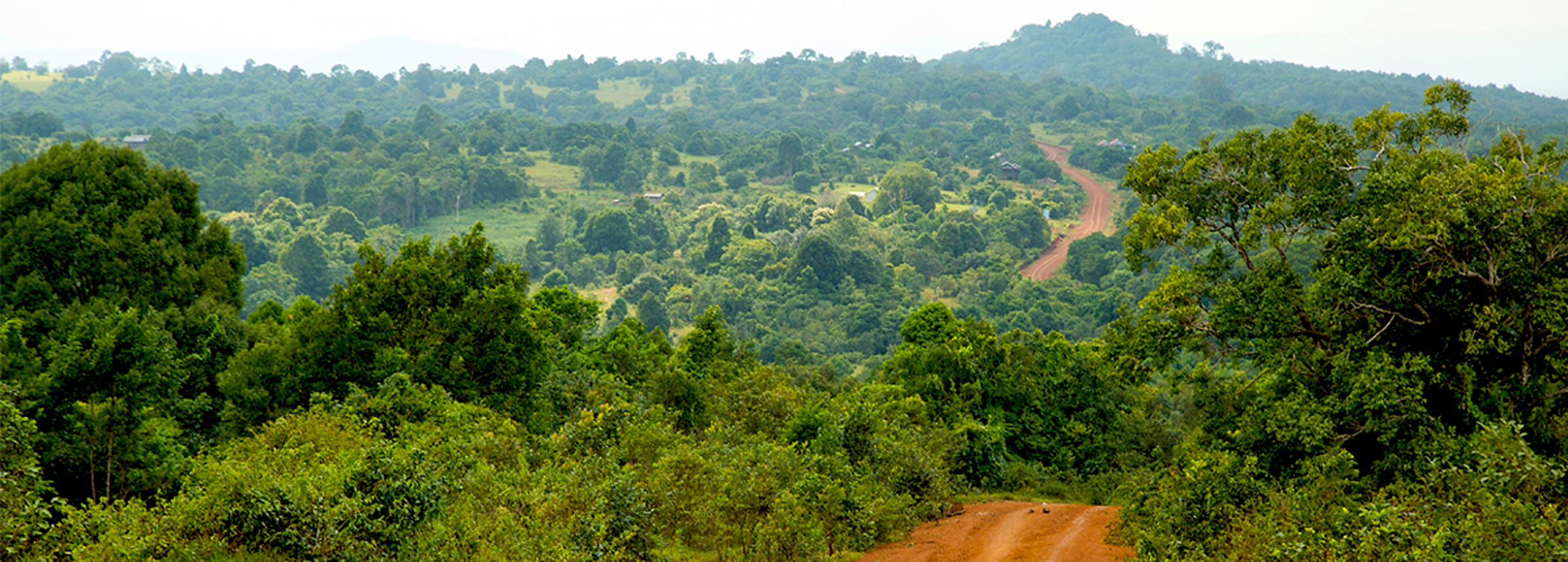 Road to Prey Lang Village