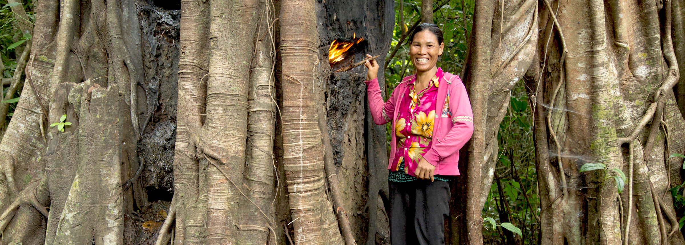 Woman collects resin in Cambodian forest