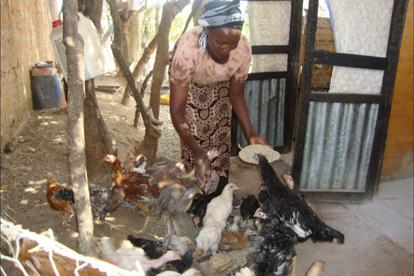 Alice Makau raises chickens to earn income and feed her family.