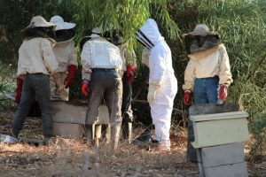 Inspecting beekeeping practices in Senegal