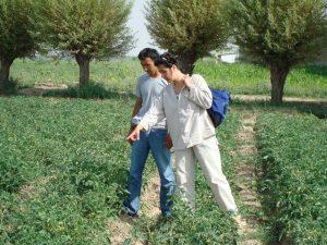 advising a tomato farmer in Kyrgyzstan