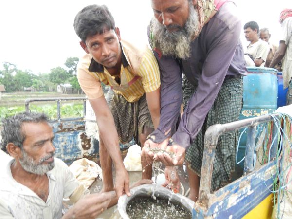 Fish hatchery suppliers with carp fingerlings