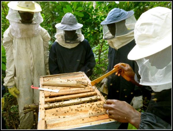 gui113-topbar-hives