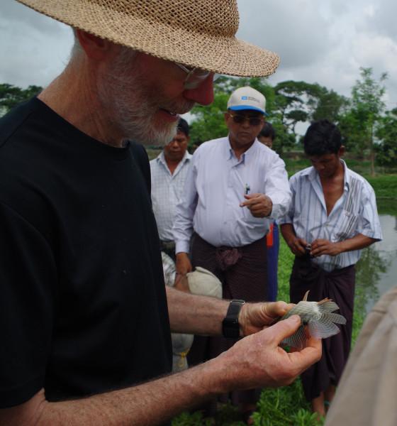 Hugh inspects mono sex tilapia at a local fish farm
