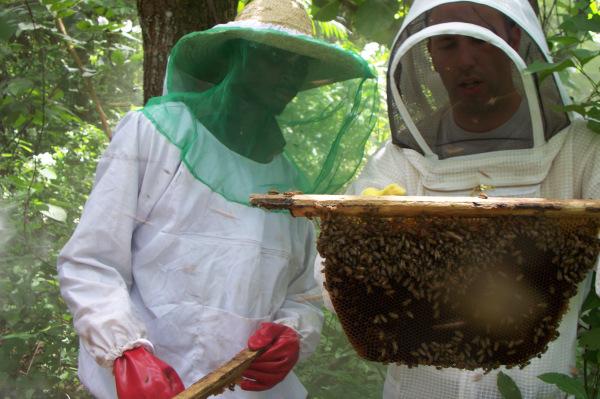 mark-blevins-nig249-bees