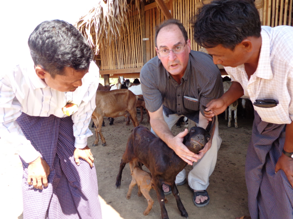 Robert Spencer demonstrates disease prevention techniques with goat farmers in Yenagyaung. (photo credit: Dr. Thet Khaing, Winrock International)
