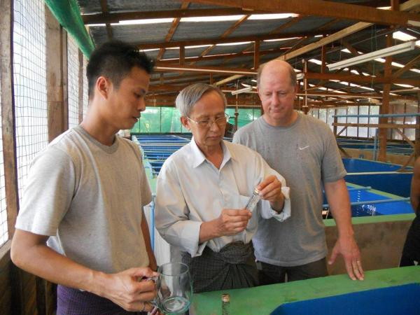 Volunteer, Mike Frinsko, and hatchery staff collect prawn larvae for health screening