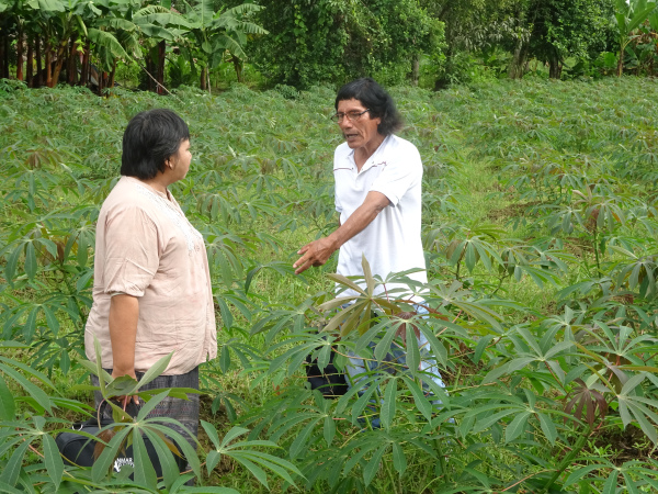 Luis and Daw Than Than Sein discuss local cassava techniques and farming systems prior to the training