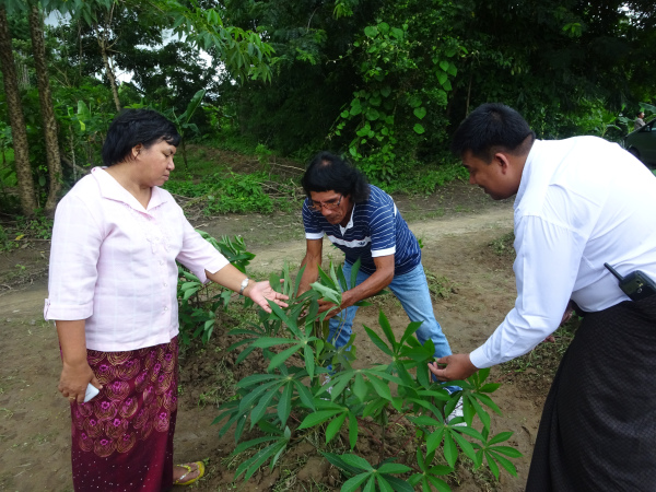 U Kyaw Thu Ra, Chairman of the Cassava Association, shows Luis and Daw Than Than Sein around a local farm prior to the start of the training