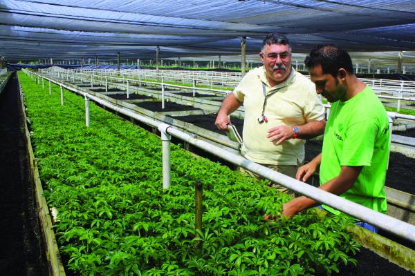 Volunteer Alejandra Zegarra trains nursery producers