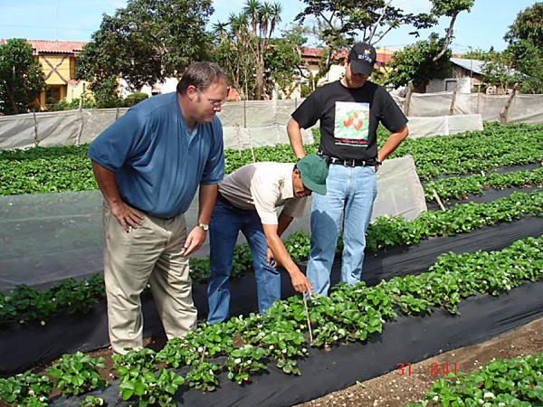 volunteer-james-luzar_improving-strawberry-production_els028