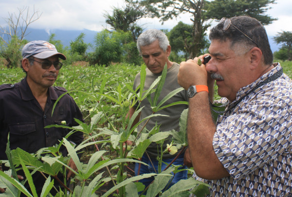 In El Salvador, volunteer Alejandro Segarra-Carmona (right) shows local farmers how to apply sustainable pest control techniques to their crops. Segarra-Carmona came here to provide good agricultural practice training, integrated pest management and quality standards. Trainees will apply these techniques to increase production and improve quality.
