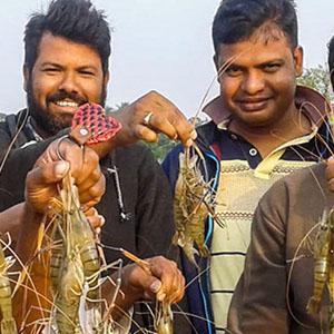 How New Shrimp Farming Methods are Improving Lives in Bangladesh